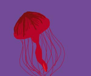 a jellyfish