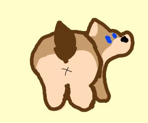 Corgi Butts