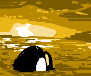 Killer whale looking at sunset