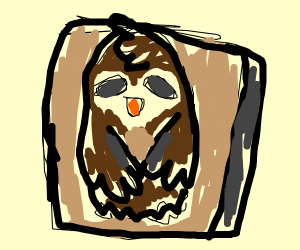 Owl Box Cover