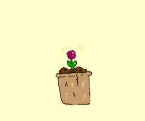 Tiny flower in a pot