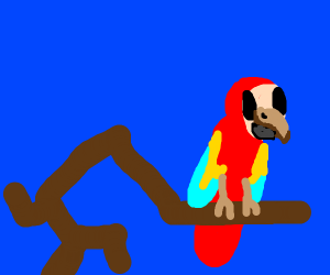 a red parrot with blue background