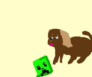 Dog finds a creeper head.