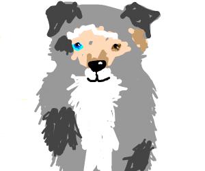 Aussie Pom Dog