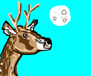 A deer looks at the moon at day