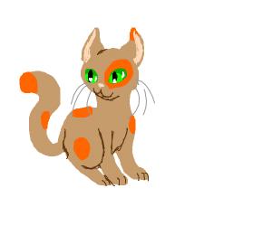 Brown Cat w/ Orange patches