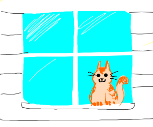 Pet Window