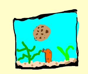 Cookie in an Aquarium