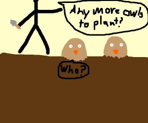 Owl Planting
