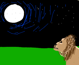 Lion watching zee moon
