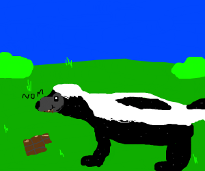 skunk eating chocolate