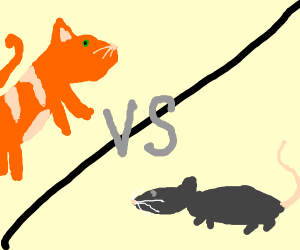Cat vs Rat