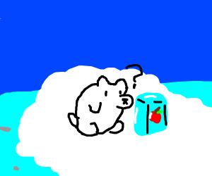 polar bear questions apple in ice block