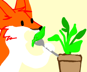 Fox eats plant