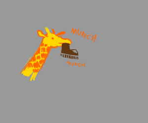 Giraffe eating someone's shoe