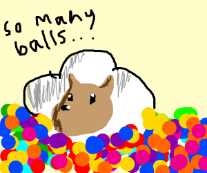 sheep lying in a ball pit