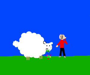Fat sheep eats guy's flowers