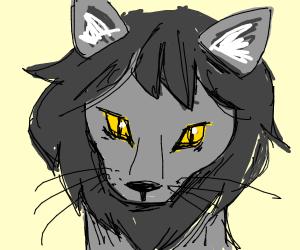 grey lion cat w/ yellow and black eye