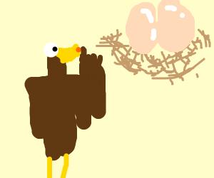 Bird telling eggs to stfu