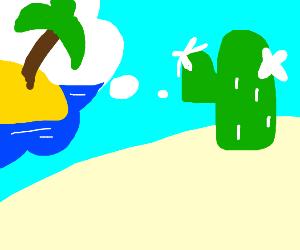 Flowering cactus dreaming of island life