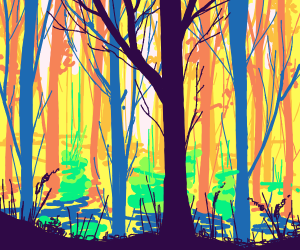 Sunlight seen from deep in the woods