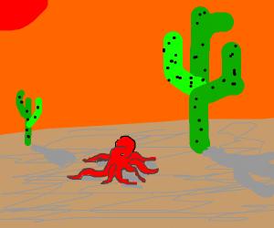 Octopus in the desert