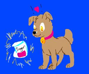 a female dog enjoys sugar