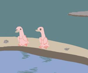2 ducks chill by a calm sea