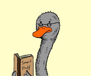 300iq ostrich
