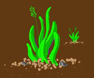 Grass duh