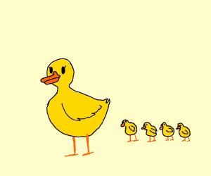 Mama ducks w/ baby ducks