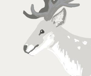 Gray reindeer