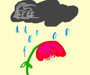 A sad flower