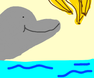 dolphin smiles at bananas