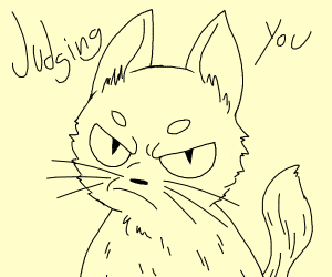 This cat is judging you.