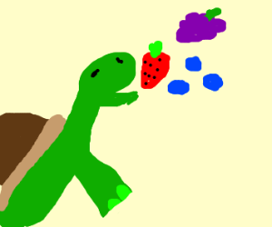turtle enjoys some fruit