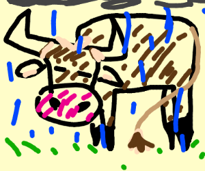 A bull in rain