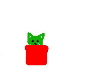 kitty cactus in plant pot