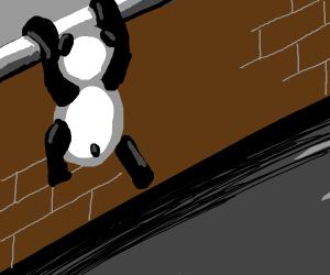 Panda climbing brick wall
