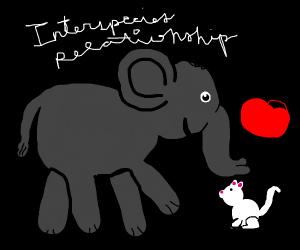 inter-species relationship
