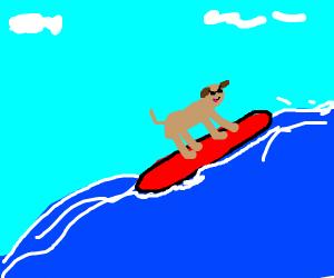 a surfing doggo