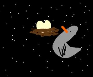 Bird makes nest in the vast void of space