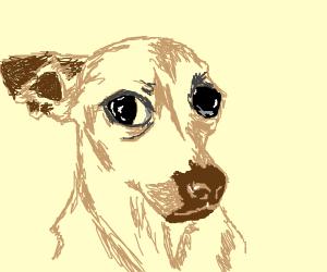alarmed doggo