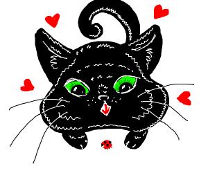 Black cat loves his ladybug