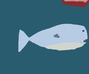 Happy shark week :)