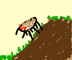 Tarantula in a Mudslide