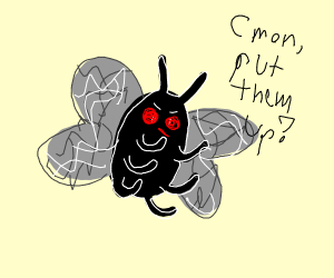 A fly that wants to fight