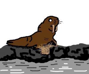 Walrus Basketweaving