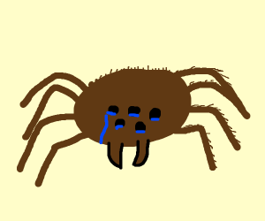 Depressed Tarantula