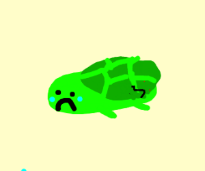 Sad turtle(broken shell)